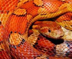snake 579682_1920 300x245 300x245